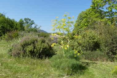 Jardin méditerranéen en Avril